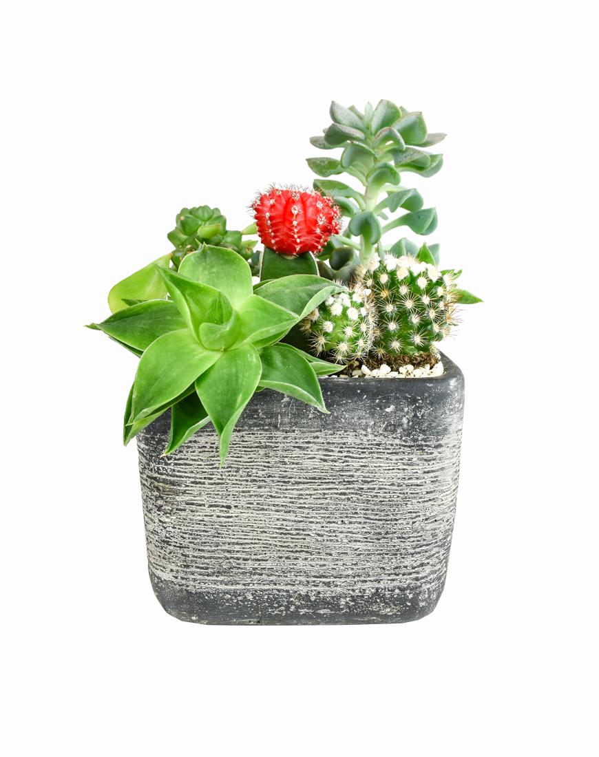 Piante Grasse Da Esterno composizione piante grasse vaso quadrato